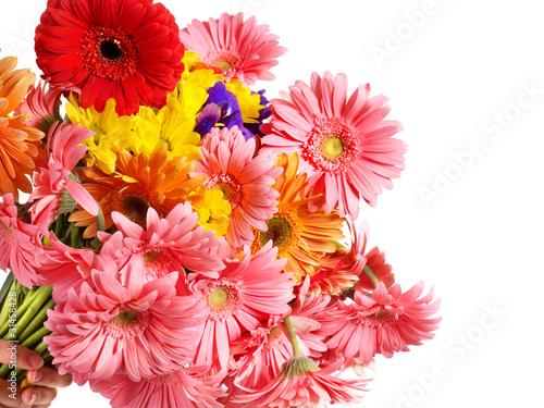 Fototapeta Group of gerbera flower head obraz na płótnie