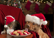 Cat And Dog Devouring Santa's ...