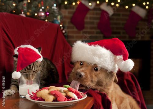 Cat and Dog devouring Santa's cookies and milk © Michael Pettigrew