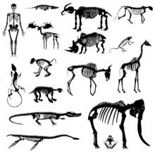 Skeleton Collection Vector