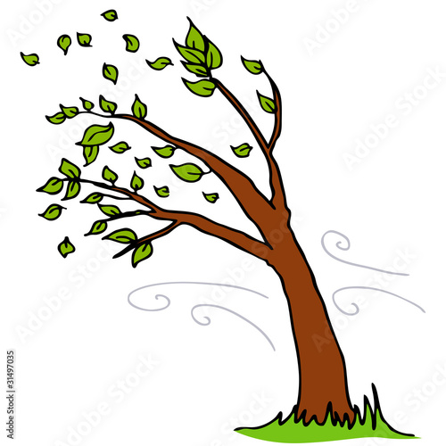 Fotografie, Obraz  Wind Blowing Leaves Off Tree