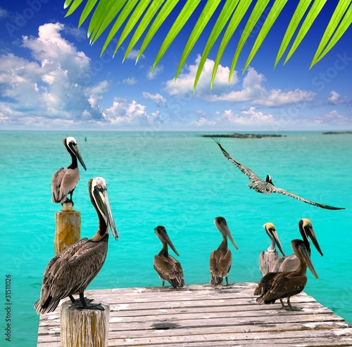Spoed Foto op Canvas Caraïben Caribbean pelican turquoise beach tropical sea