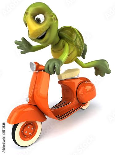 Foto op Canvas Motorfiets Tortue et scooter