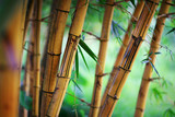 Fototapeta Bamboo - Bamboo forest background