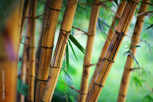 Montage in der Fensternische Bambus Bamboo forest background