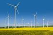 Leinwandbild Motiv Windkrafträder in einem Rapsfeld
