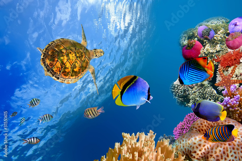 Poster Tortue Underwater landscape with couple of Butterflyfishes and turtle
