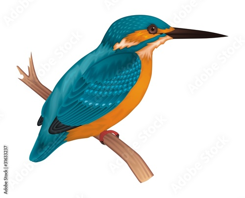 Cuadros en Lienzo Kingfisher Vector