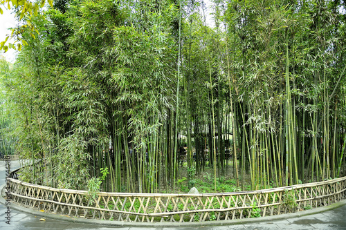 the-bamboo-groves