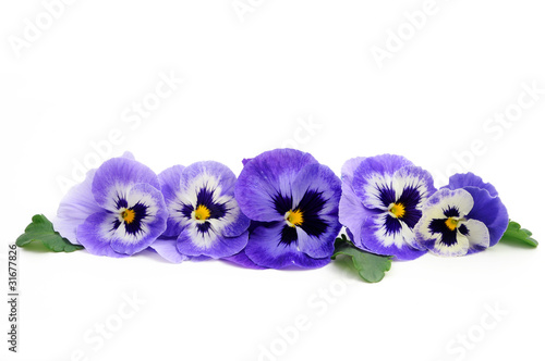 Papiers peints Pansies Pansy borde