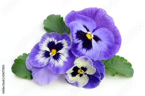Stickers pour porte Pansies Pansy