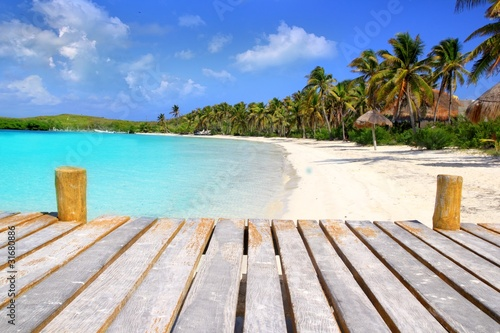 Photo Stands Caribbean Contoy Island palm treesl caribbean beach Mexico