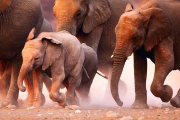 Fototapeta na wymiar Elephants