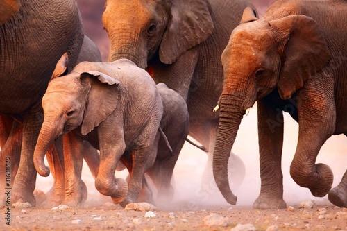 Obrazy na płótnie Canvas Elephants