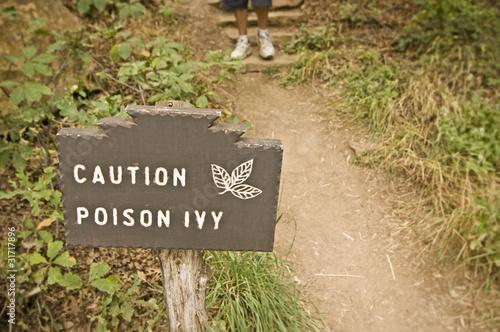 Fotografie, Obraz  Pozor Břečťan jedu (Toxicodendron radicans)