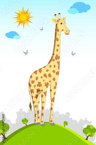 Foto op Aluminium Zoo Standing Giraffe