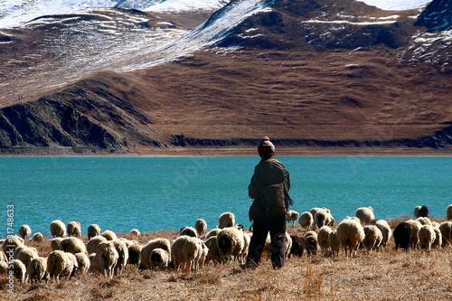 Obraz na plátně tibet shepherd