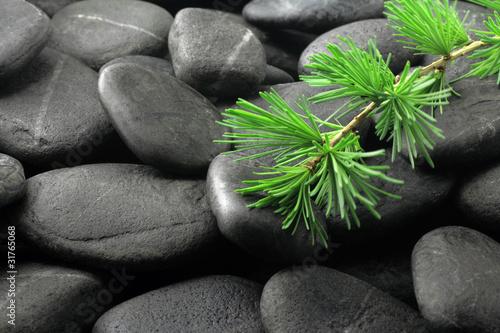 zielona-galaz-na-ciemnych-kamieniach-bazaltowych-do-spa