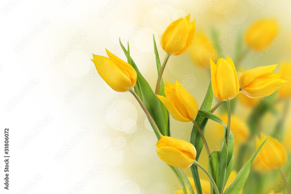 Fototapety, obrazy: Żółte tulipany