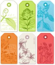 6 étiquettes Botaniques
