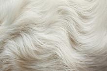 Pelliccia Bianco Di Animale