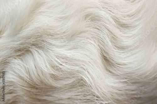 Pelliccia bianco di animale Billede på lærred