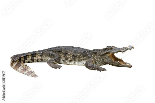 Foto op Canvas Krokodil alligator