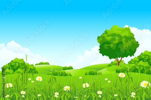 Foto op Aluminium Blauw Green landscape