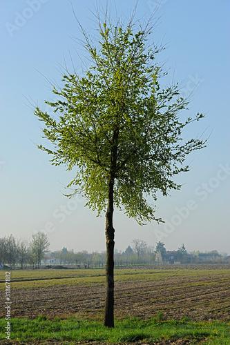 alberi 1523 © peggy