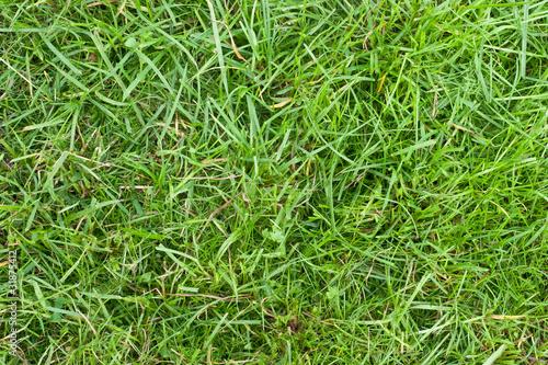 Cadres-photo bureau Herbe Green grass