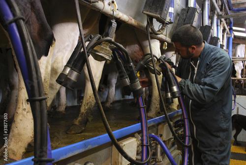 Poster de jardin Vache Agriculteur-éleveur pendant la traite