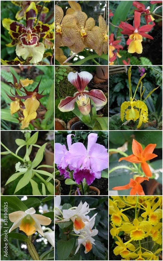 Obraz Storczyki i orchidee fototapeta, plakat