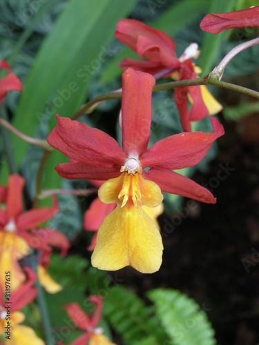 Fototapeta Storczyki i orchidee obraz