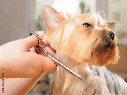Fotomural  Professional grooming