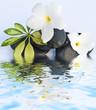 décor zen institut massage, sauna, galets et fleurs blanches