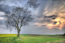 Drzewo4