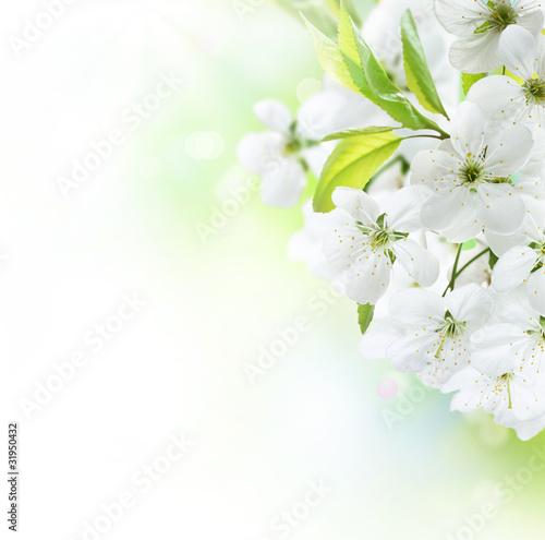 Naklejki o różnych zastosowaniach granica-wiosna-kwiaty-wisni-sad-owocowy