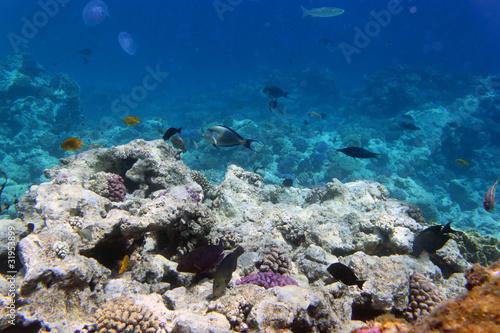 Fényképezés  Кораллы