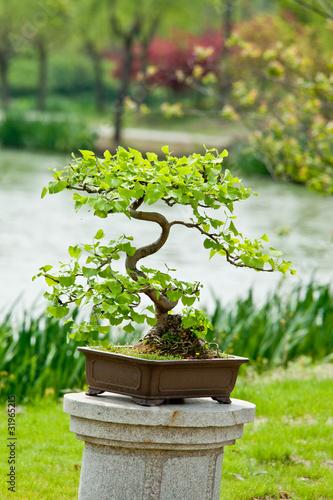 Fotobehang Bonsai bonsai