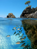 Surface and underwater view with rocky islet and school of saddled seabream fish  Mediterranean sea, Catalonia, Costa Brava, Spain
