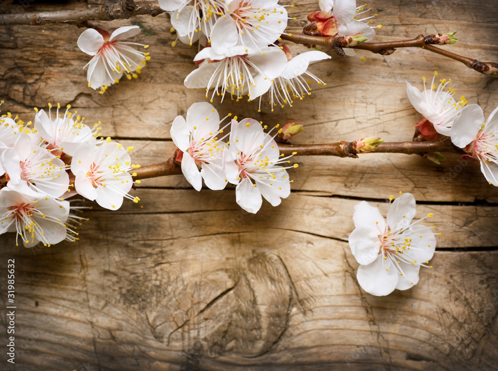 Fototapety, obrazy: Drewniane tło z wiosennymi kwiatami