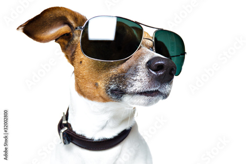 Poster Magasin de musique DOG with SHADES