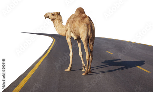 Papiers peints Chameau Camel on the road
