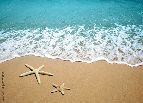 starfish on a beach sand Canvas Print