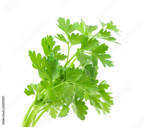 Fototapeta parsley obraz