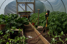 Poly Tunnel Produce.