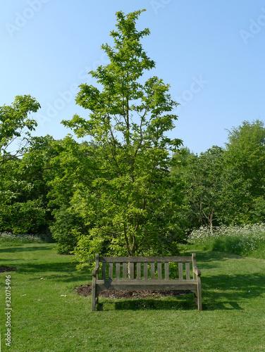 Fotobehang Tuin イギリスの新緑の公園