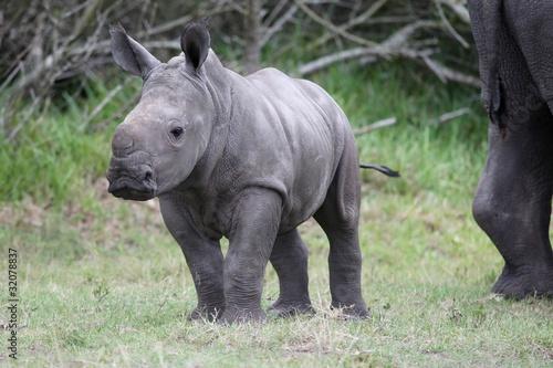 Spoed Foto op Canvas Neushoorn Baby Rhinoceros