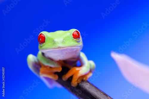 Türaufkleber Makrofotografie Green Frog