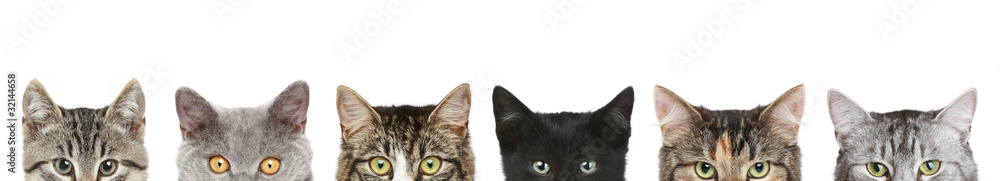 Fototapety, obrazy: Cat's half heads on a white background